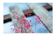 RED (JO.JO Chen) Tags: street uk portrait england london 120 zeiss cat canon eos scotland nc 645 edinburgh fuji kodak mark 14 leeds documentary bronica ii 400 carl 28 135 50 provia vc ze planar rvp 160 distagon rdp etrsi redmorning 5d2