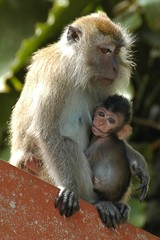 A Maternal Monkey Moment