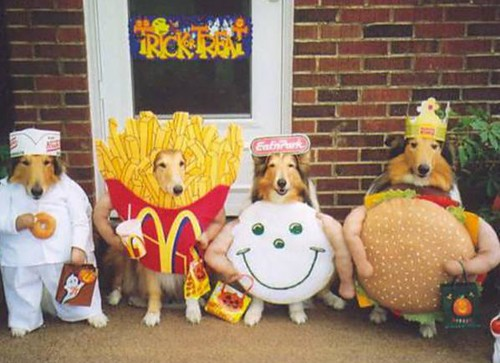 funny dogs dressed up. -dogs-dressed-up-in