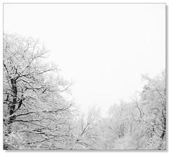 Today   Spring Wonderland (fxp) Tags: trees winter white snow black germany landscape scenery bergischgladbach aplusphoto flickrchallengegroup flickrchallengewinner