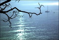 tramonto bianco (cacciaramarri) Tags: mare vela riflessi bianco trieste rami lamiacitt miramare orizzonte tramontobianco