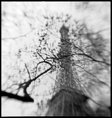 Touristique (robert schneider (rolopix)) Tags: blackandwhite bw blur paris france tree 6x6 film monochrome square europe kodak eiffeltower eu april brownie hawkeye expired 2008 vp outdated 620 bhf browniehawkeyeflash flippedlens outofdate verichromepan kodakvp 120620 fixedshadows 7emearr believeinfilm