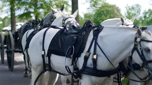 Horse Drawn Wagon, Arlington National Cemetery