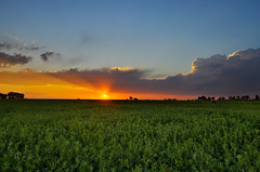 Verdant Spring Sunset (Fort Photo) Tags: sunset orange plants green sol nature field clouds rural landscape spring nikon bravo colorado warm sundown dusk farm weld vivid growth co medicagosativa verdant nco eyecandy alfalfa d300 solardisc naturesfinest specland fineartphotos mywinners