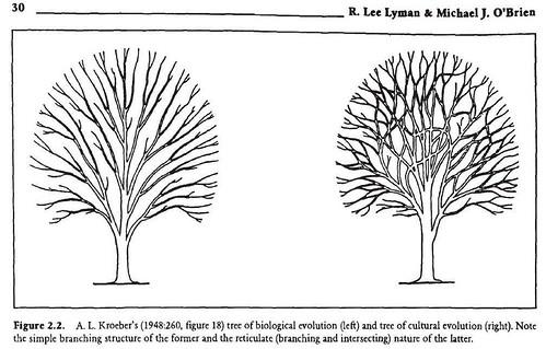 Kroebers trees