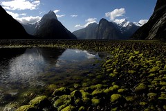 Milford Sound in Spring  Rob Watkins 2004 (Aland Rob) Tags: park new sea mountain snow reflection green scale nature water pool beauty rock island natural south united peak pebbles un zealand national sound area milford mitre nations guas outstanding fiordland divinas piopiotahi photographrobwatkins guasdivinas