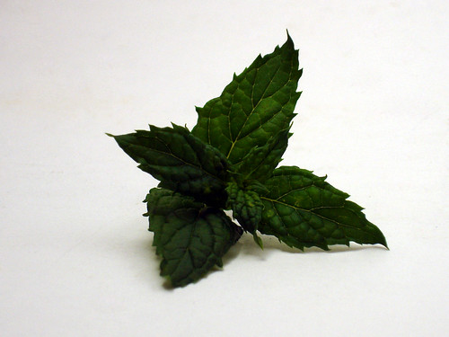 Spearmint leaves photo
