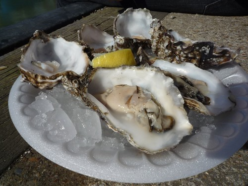 oysters in Whistable bay