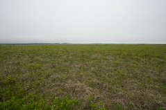 琵琶瀬木道からの霧多布湿原