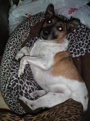 good morning (Alexandratx) Tags: dog terrier artie