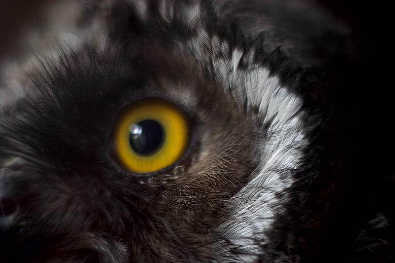 Yellow eyed man