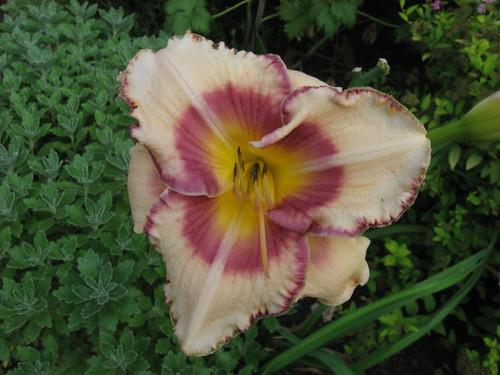 garden shots July08 012