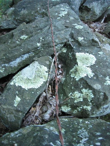 Lichen covered stone and steel wire