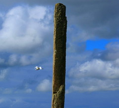 """The Swan and the Stone (little_frank) Tags: old uk blue wild sky bird heritage history megalithic monument nature beautiful beauty vertical stone standing wonderful liberty freedom scotland site amazing fantastic swan ancient orkney stenness scenery europe alone peace place natural cloudy britain monumento dream azure free surreal scottish peaceful tranquility silence stunning british dreamy lonely column wilderness upright past prehistoric monolith antico impressive myth sito ancestral neolithic passato megalith mythical scozia whooper menhir primordial """"united immensity cigno preistorico prehistorical megalitico scozzese megalite"""