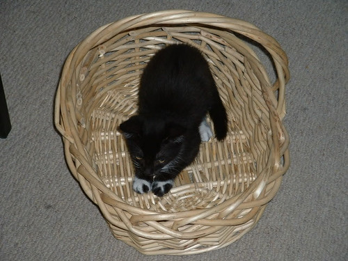 Basket of Cute