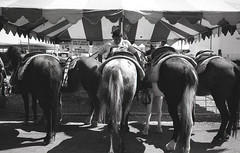 Smells funny (LoFiKen) Tags: leica horses bw horse white black film ass feast photography san fair tent butts hardcore 400 m42 stable arista sunny16 123bw gennarro
