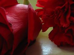 Macro Rosa e Cravo