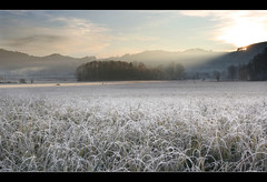 frosty morning (matthiasuhl) Tags: trees ice grass sunrise landscape austria silhouettes frostymorning soe morningsun lightcone theunforgettablepictures
