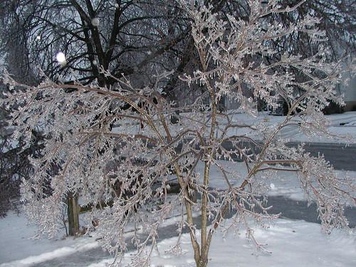 icestorm12-19-08dogwooddawn