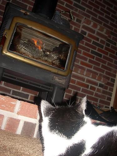 Dewey Watching Woodstove