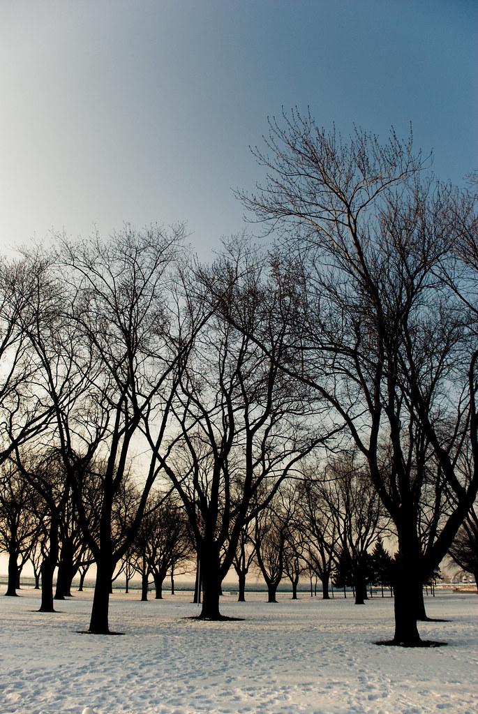 TreesMisc-0175.jpg