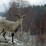 Highland wildlife park  (13) thumbnail