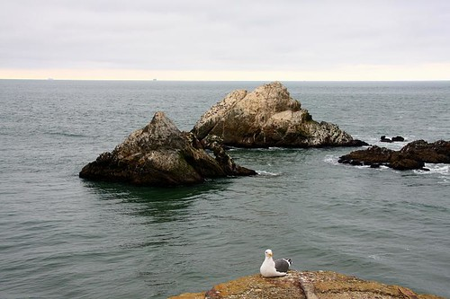 Gull & Seal Rock -- Leah's visit to San Francisco