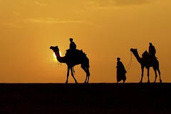 Desert in the Evening.                                                I Dedicate this pic to My Flickr friend Helga_262 (Tilak Haria) Tags: sunset sun india evening desert camels jaisalmer rajasthan khuri pratibimbsangli motifdchallengewinner savebeautifulearth