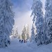 snow image, photo or clip art