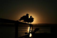 Navigation or Birds and fish (a California sunset) (Ferran.) Tags: california sunset sea usa bird nature birds bay mar sandiego 4 natura sandiegobay lv2008