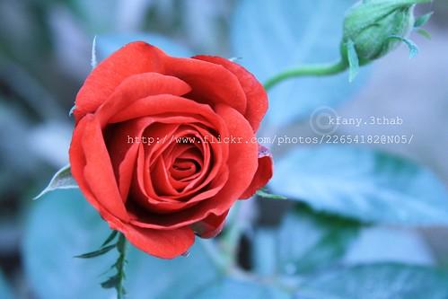 يعيش حياة طبيعية 3188046252_fb1dbff41d.jpg