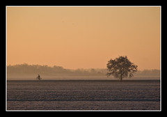 Lonely bicyclist and tree (Focusje (tammostrijker.photodeck.com)) Tags: holland tree netherlands bike bicycle silhouette sunrise dusk boom fiets theperfectphotographer