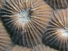 Coral Goby, Fim do Mundo