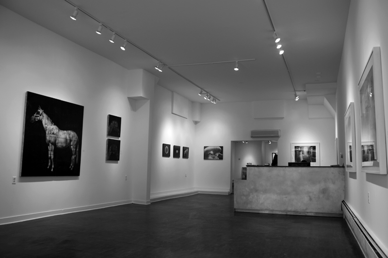 Equus at Carrie Haddad Photographs
