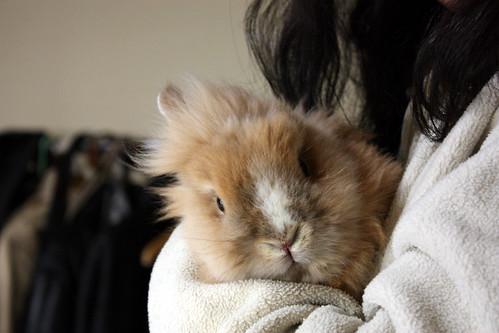 rabbit in my room