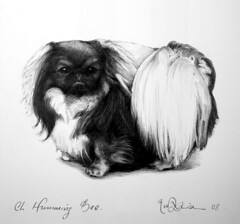 Ch.Humming Bee (Pekingese) (Rick_Dickinson) Tags: dog artist drawing historic pekingese ch wigan rickdickinson canineart crowlanestudio chhummingbee championtoydog