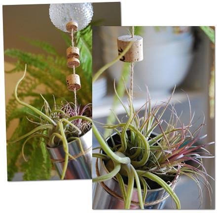 air plants 3  twine