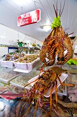 Box 13 Bertioga SP (Shigow) Tags: brazil fish praia beach up brasil fisherman nikon mine close tail salmon victor tokina peixe lobster paulo nikkor 18200 são sardines fishmonger pescador rabo bertioga filé fillet sardinha d300 salmão lagosta peixaria 1116 shigueru ituverava shigow