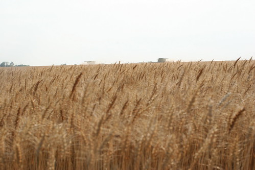A field near Hazleton