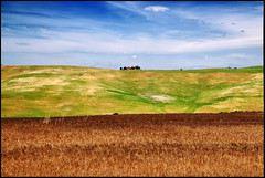 ...little house on the prairie... (zio paperino) Tags: italien sky italy nature field grass lines clouds rural landscape nikon italia wheat country ears natura campagna tuscany siena toscana valdorcia trigo grano spighe d90 sanquirico ziopaperino mygearandme mygearandmepremium