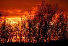 Sky fire - Le ciel en feu (woso) Tags: sunset sky tree bird fire ciel arbres layer oiseau feu couchdesoleil couche 10faves abigfave anawesomeshot superbmasterpiece almostanything diamondclassphotographer flickrdiamond betterthangood goldstaraward