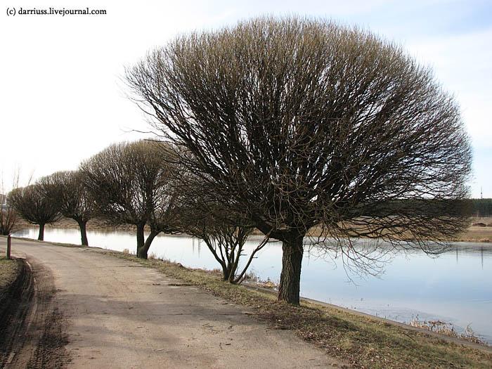 drazdy_trees
