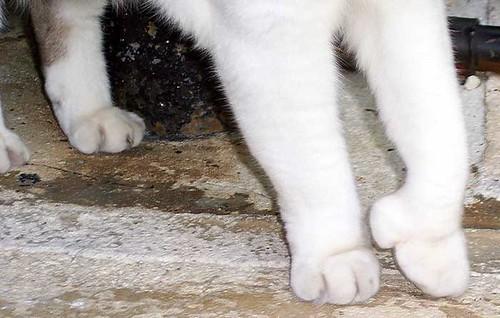 cat_toes