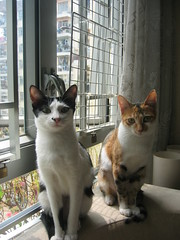 Milly & Ha Pak Mi (Kouchilei) Tags: mi ha milly pak
