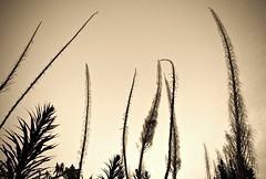 (navidbaraty) Tags: sf sanfrancisco california 15fav plant twinpeaks