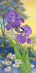 """Evening Song' AER87 by A E Ruffing Chickadee