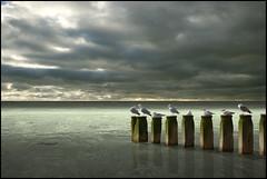 Continuing ........ Begining....... (Opo Tobus) Tags: art water beautiful birds seaside poseidonsdance