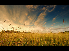 English Summer (ChrisHepburn) Tags: sunset summer england sky cloud sun nature grass landscape gold golden warm long wheat wideangle lowdown
