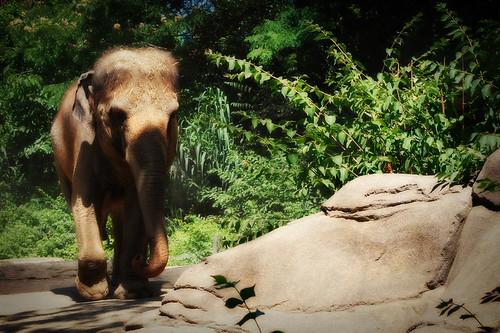Elephant LowRes