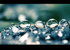 After the rain (~Ella) Tags: macro water rain droplets raindrops waterdrops aftertherain 100mmf28 eow frontpageexplore raindropsonleaf everythingisbetteronblack